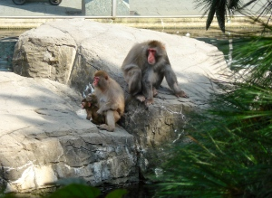 Snow monkeys and snow monkey baby.