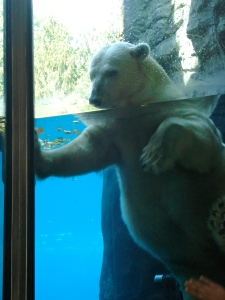 Another view of the polar bear.